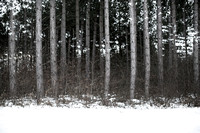winter forest #9