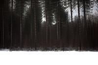winter forest #7