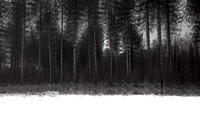 winter forest #8
